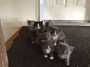Rescue kittens to approved homes only