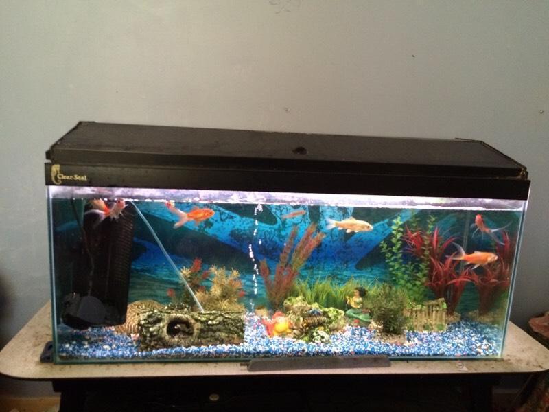 Clear seal 110litre fish tank in norwich norfolk gumtree for Aquarium decoration sealant
