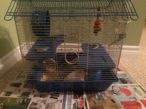 Hamster looking for loving home !