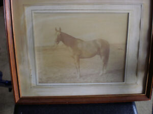 4 HORSE PICTURES London Ontario image 6