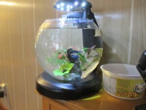 BEAUTIFUL BLUE BETA FISH AND ACCESSORIES