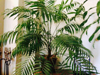 Several beautiful tropical trees and plants great for indoors