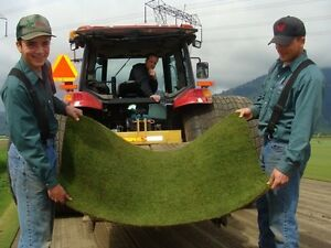 Farm Fresh Turf Sod