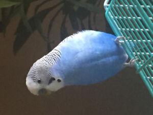 Lost bird