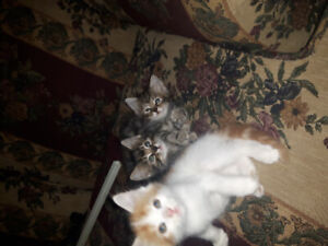 3 kittens to loving forever homes