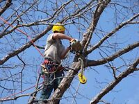 Arborist services in the NW