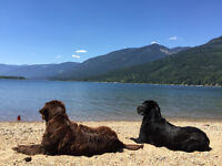 Cozy pet friendly Kootenay Cottage near Nelson