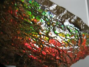 Large Piece of Ammolite / Ammonite