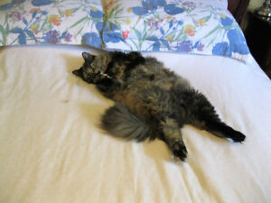 Cat Boarding-Cage Free-In My Home =^..^= $10.00 per Night