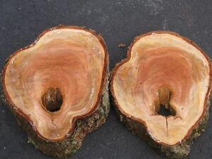 Hardwood Live Edge Slabs, Burls, Spalted Maple and Lumber