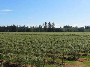 Farms for sale in Langley