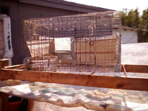 Rabbit cages and shelf BEST for meat breeders