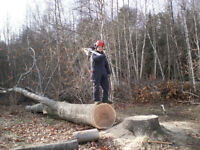 SAWMILLING,TREE REMOVAL, STUMP GRINDING, BRUSH CLEARING.