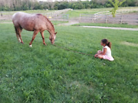 Pony Pals - Riding sessions for beginners