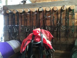 BRIDLES  English and Western for larger horses