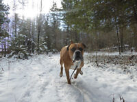 Off-leash group walks (Ottawa west) - Try it for FREE