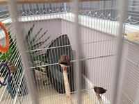 Large bird cage and two zebra finches