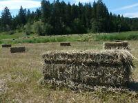 Hay (no-spray)