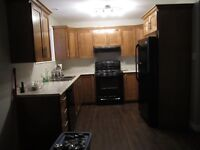 1 bedroom basement apartment in Airport Heights