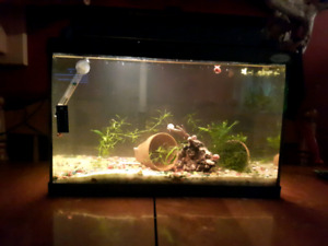5 gallon tank with 2 plants and full of pink ramshorn ...