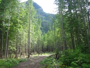 5.5+ acres for sale Revelstoke British Columbia image 3