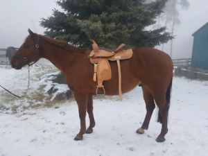 BRAND NEW Western saddle for sale