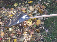 Leaf Raking & int/ext Maintenance 613 302-9295 call text email