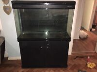 Boyu 250 Litre Fish Tank with extras (see description)
