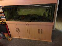 5. Foot nd aquatics fish tank