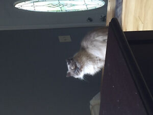 LUCY IS MISSING Kitchener / Waterloo Kitchener Area image 8
