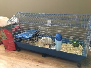 Two female Guinea pigs for sale; along with cage, food and hay.