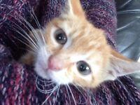 Gorgeous wee handfed kitten