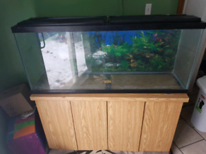 50 gallon fish tank/stand and EVERYTHING you need to run it