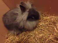 Gorgeous female baby rabbit