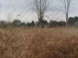 100 Acres for sale outside mount forest  Kitchener / Waterloo Kitchener Area image 9