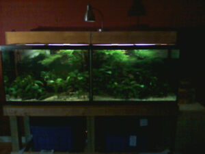 2 Aquariums complete for sale