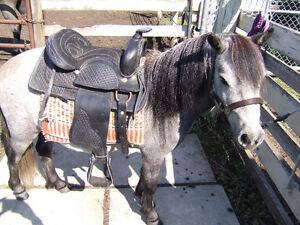NEW kids saddle 12