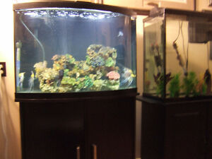 36 Gallon Bow Front Aquarium complete setup with extras