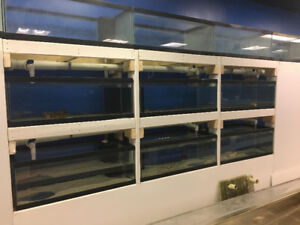 FISH/SEA CREATURES TANKS FOR SALE - LARGE AMOUNT