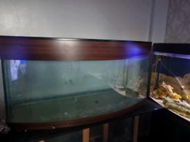 4 foot fishtank