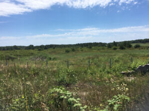 Standing Timber for sale 50 acres White Pine