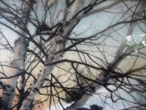 """Hand Signed, Hand Colored Photo by F. Jacquet  """"Birch Tree"""" 1920 Stratford Kitchener Area image 4"""