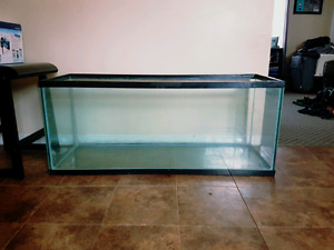 60 gallon tank and Filter