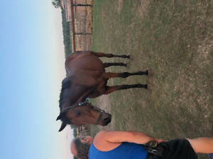 Blind tb mare TO GOOD HOME ONLY