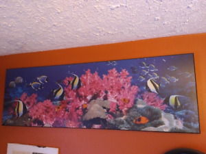 Tropical Fish Picture