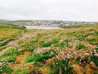 Holiday Caravan in Porth Newquay Cornwall at Newquay View Resort 10 - 17 June Indoor Pool Surf Beach