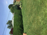 CHEAP HEDGE TRIMMING