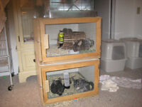 Melamine Crates Suitable for Rabbits