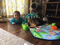 ISO: patient, loving sitter/nanny to care for 9 month old PT