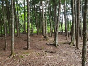 1.2 Acre Wilderness Lot in Enfield with Access to Grand Lake